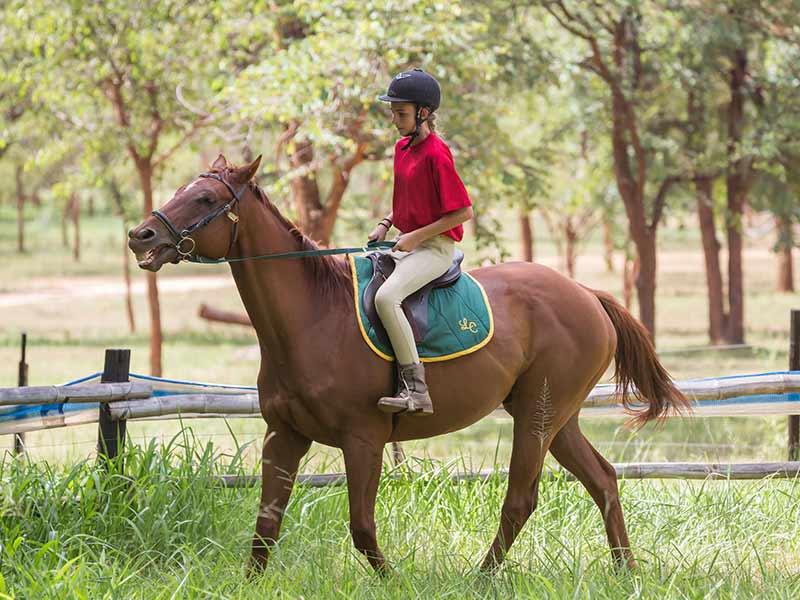 LC Equestrian Centre